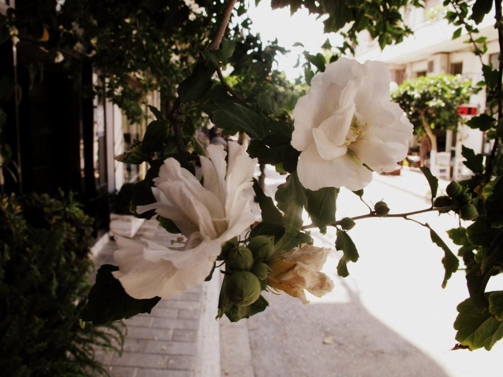 Schöne Blüten umranken den Laden …