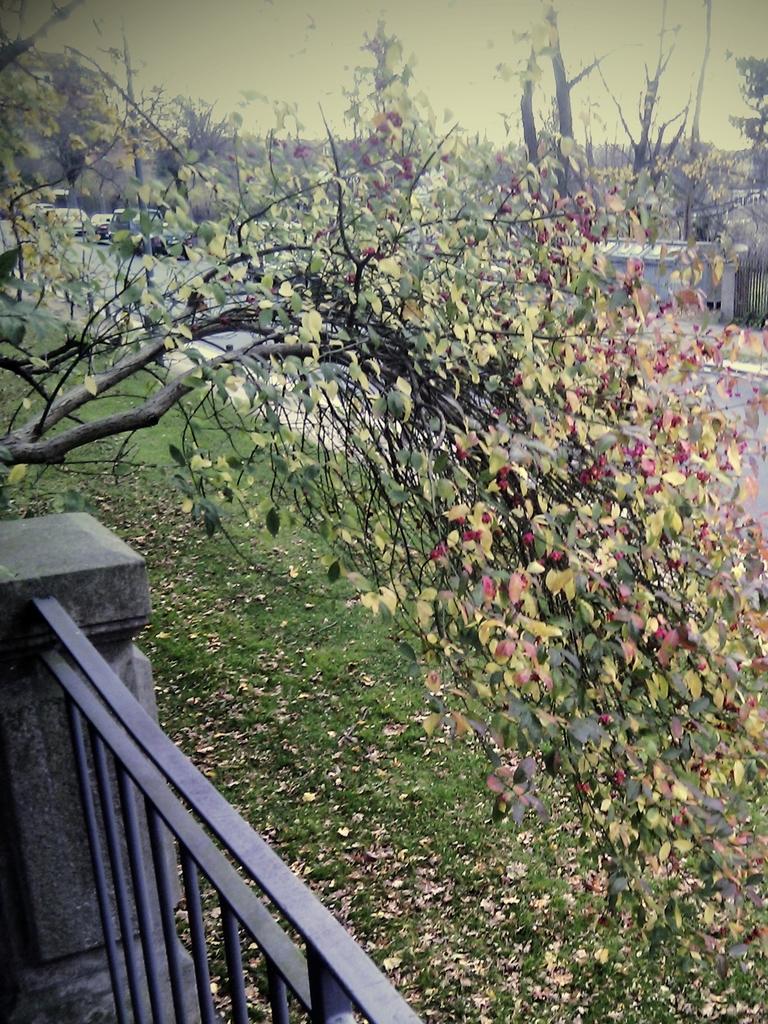 Baum am Rande des Hechtparks. Foto: JMK.