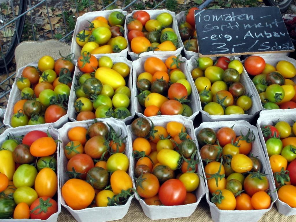 Warum in die Ferne schweifen, wenn das Gute wächst so nah? Tropisch anmutendes Tomaten-Sortiment aus dem Anbau der Familie Murgwitz aus Großröhrsdorf.