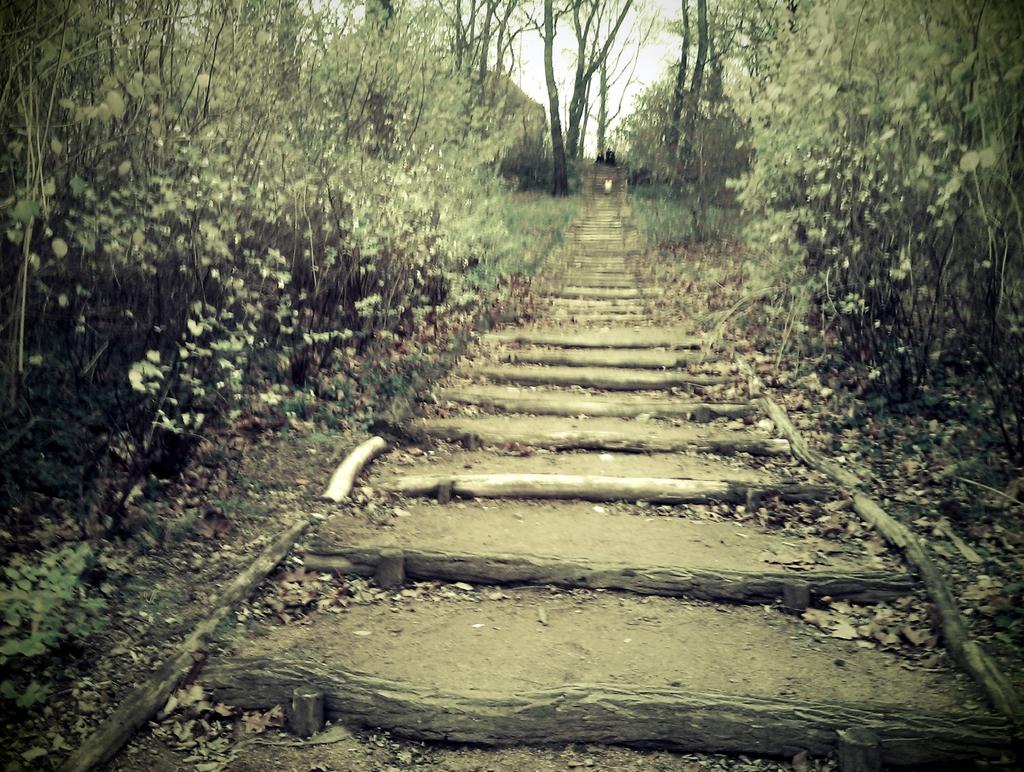 Treppe im Hechtpark.  Foto: JMK.
