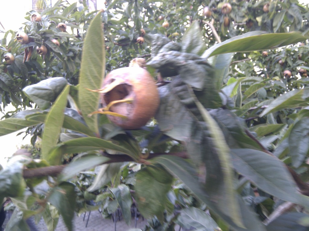 Mysteriöse Zipfelfrüchte am Brunnen im Hof der Tiere.