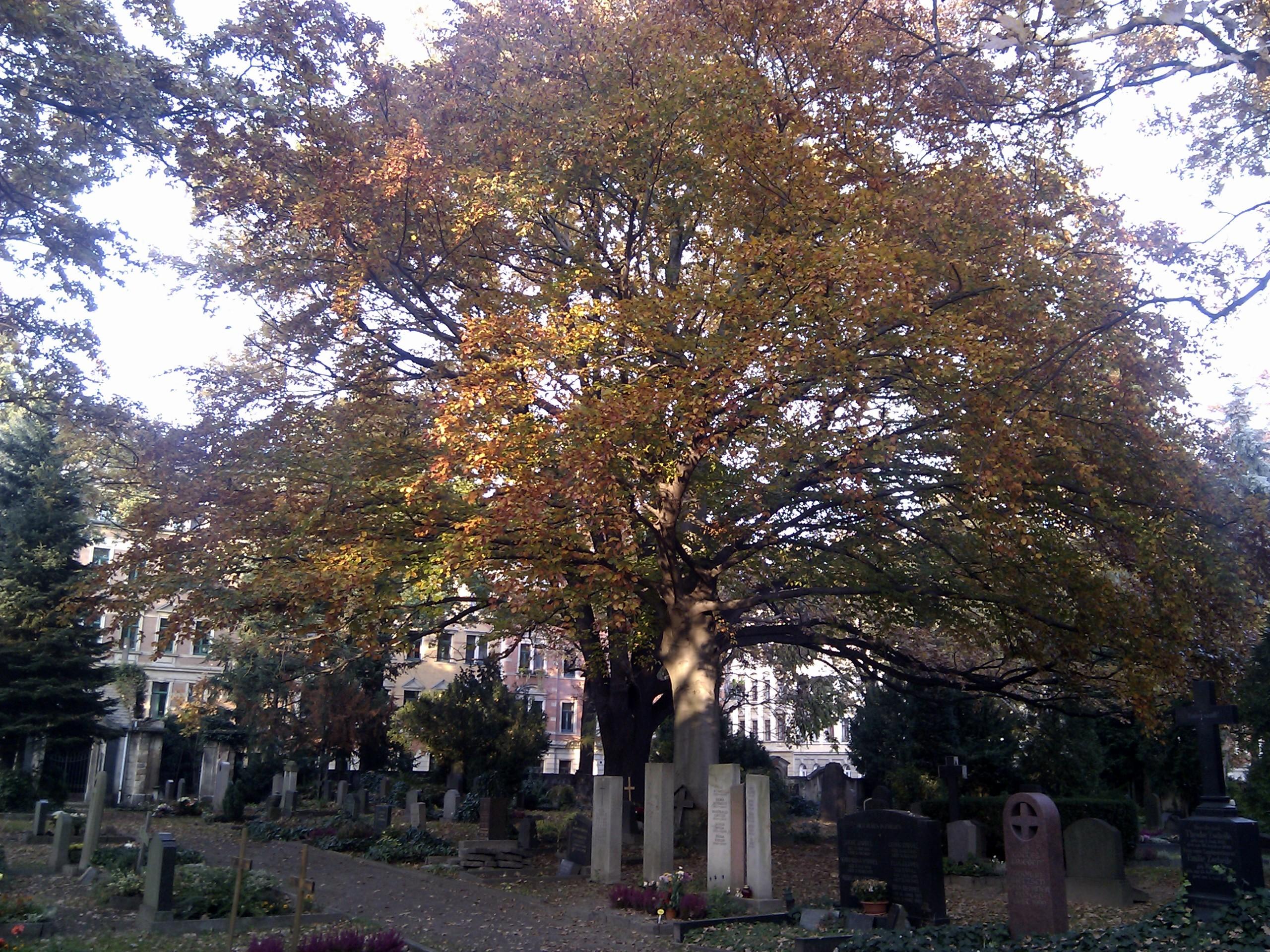 Blick vom Friedhof auf die Conradstraße.